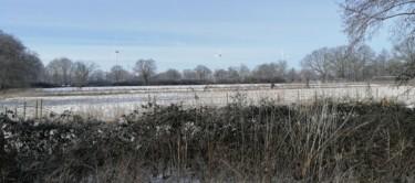 Rieder Bruch mit dem Windpark im Hintergrund